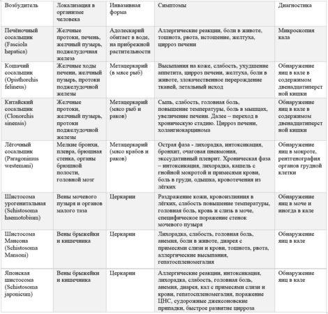 Основные трематоды