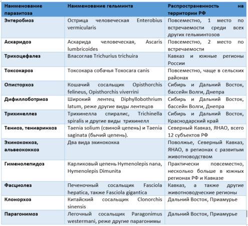 Наиболее распространенные гельминтозы РФ