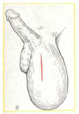 Иллюстрация 4