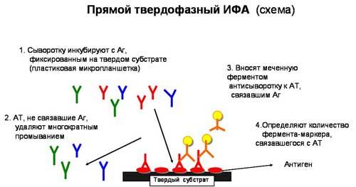 Схема ИФА (иммуноферментного анализа)